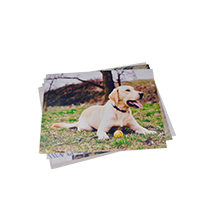 6 x 8 inch Classic Photo Print 24pk - Excluding Delivery